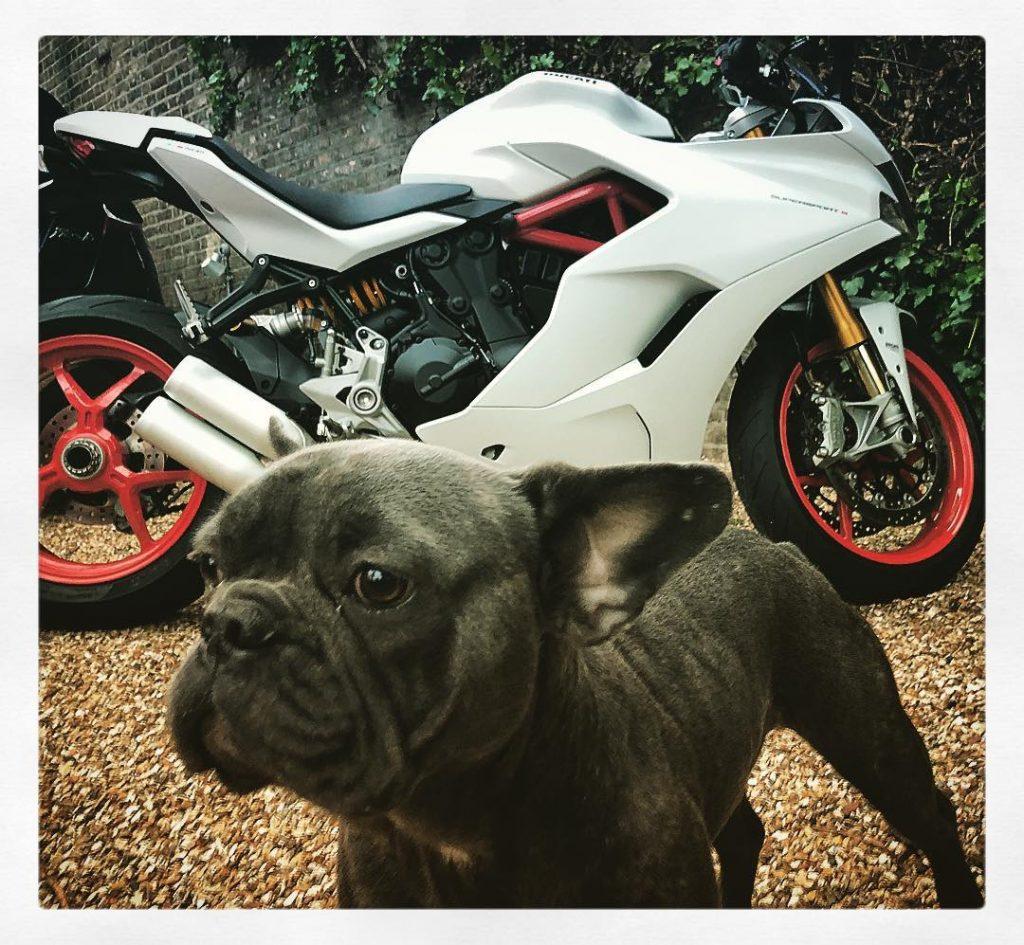 фото Тома Харди со своей собакой