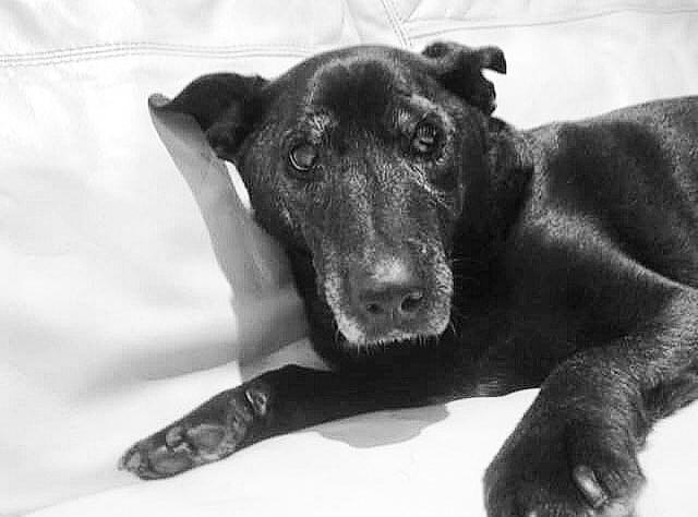 собака тома харди по имени макс