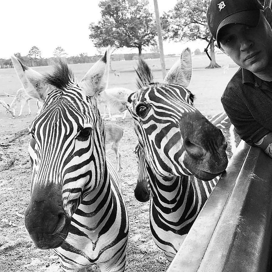 Том Харди с зебрами