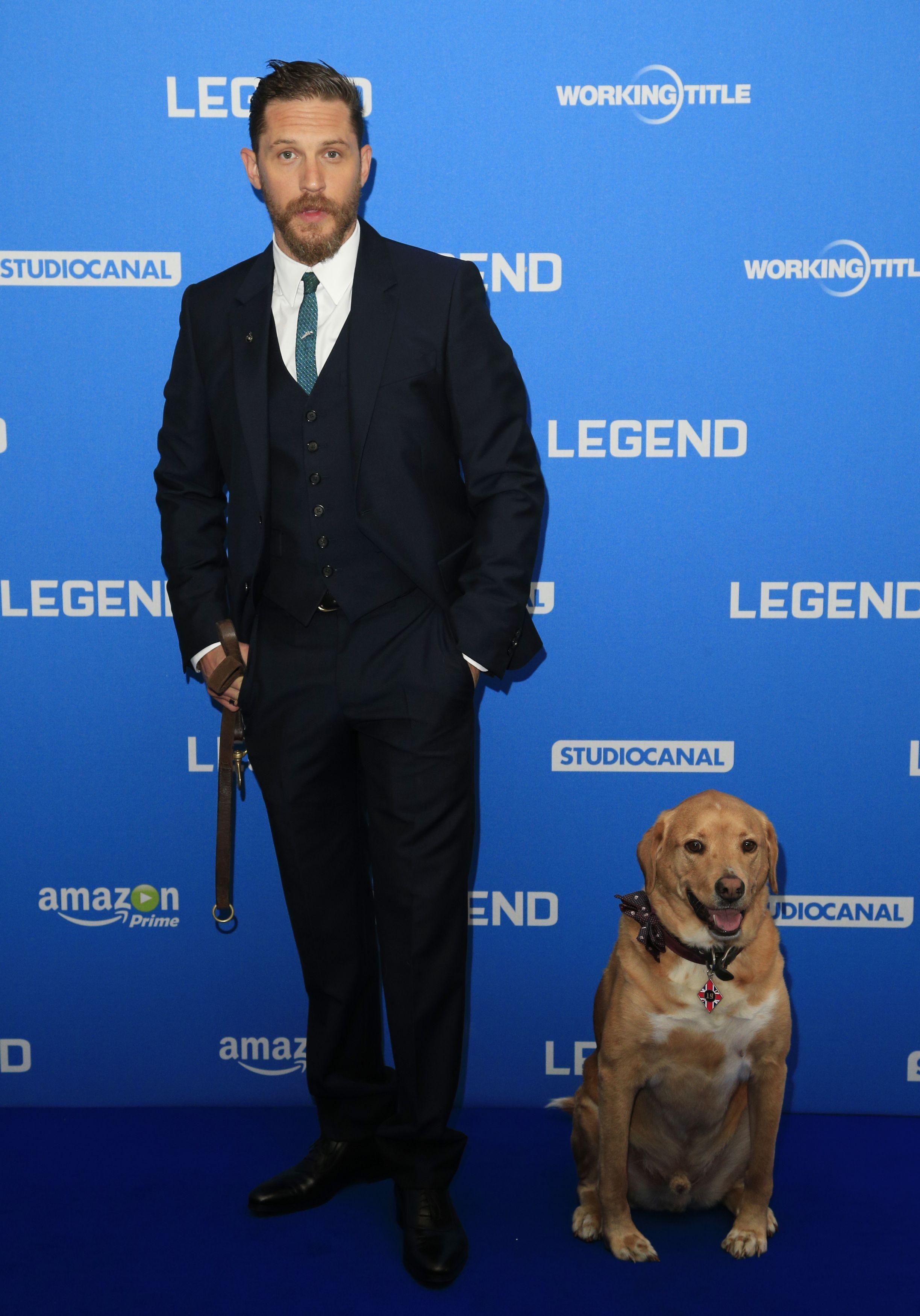 Том Харди со своей собакой Вудстоком на премьере фильма легенда